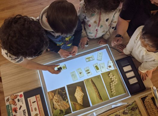 Explore & Develop - Artarmon - Junior preschool program 2